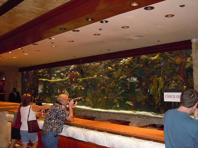 Aquariums of the vegas strip for Caesars tropical fish